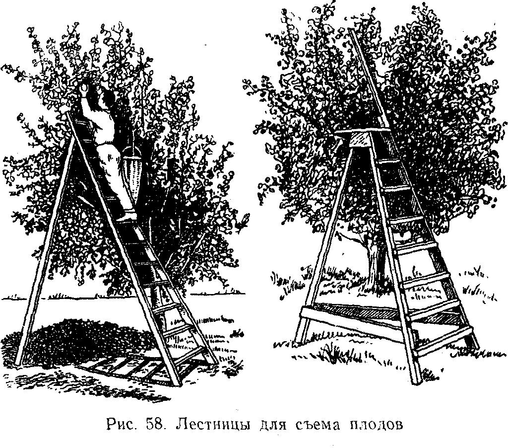 Лестницы для сема плодов