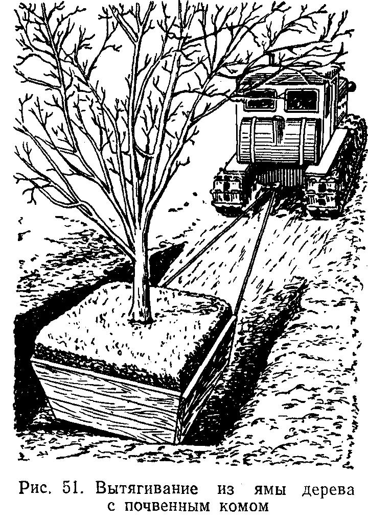 Вытягивание из ямы дерева с почвенным комом
