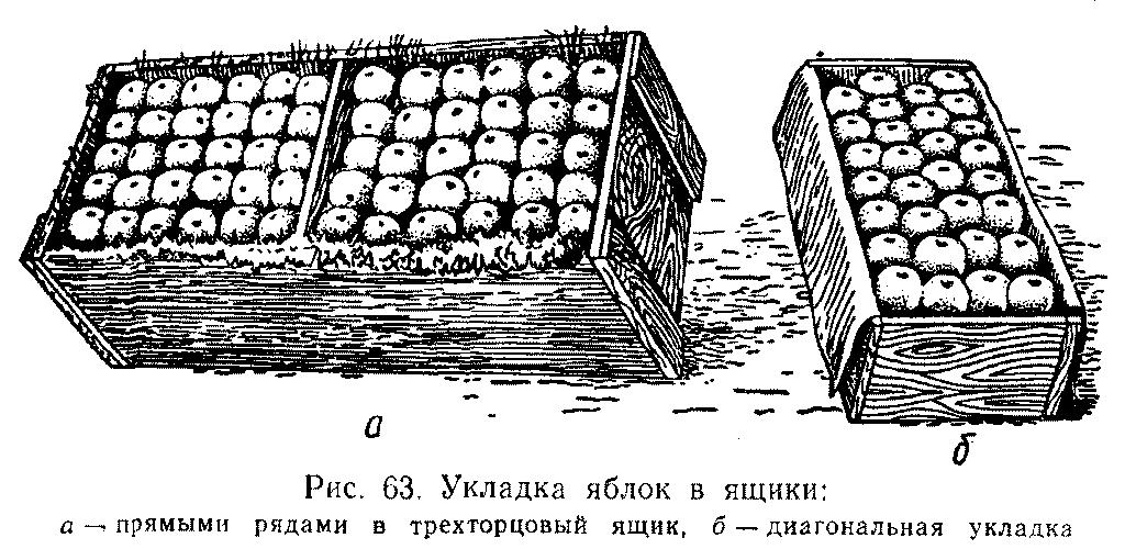 Укладка яблок в ящики
