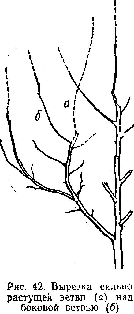 Вырезка сильно растущей ветви