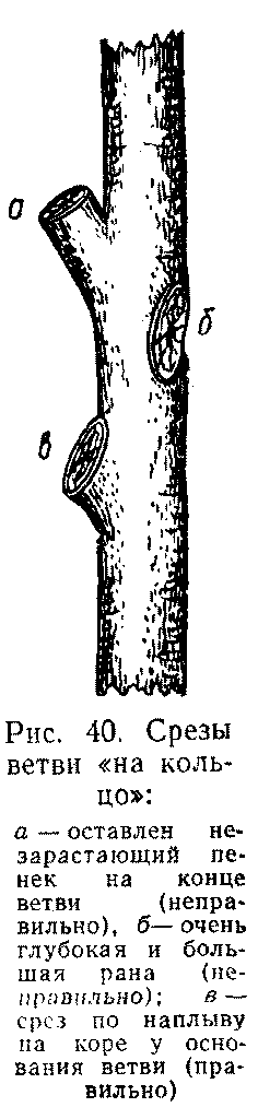 Срезы ветви на кольцо